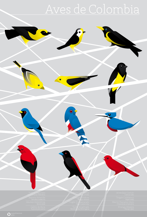 Colombian Birds by Camilo