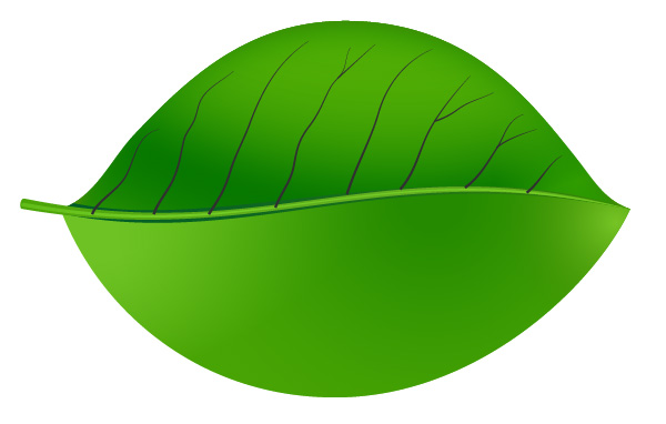 Green Leaf Vector veins